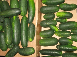 cukes, not pretty enough for stores, but fine of taste for a picky farm-grown palate
